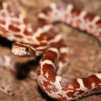 Spreekbeurt slang