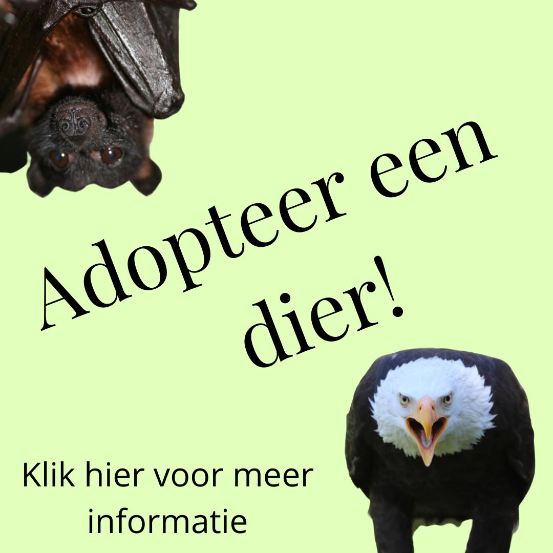 Adopteer een dier!