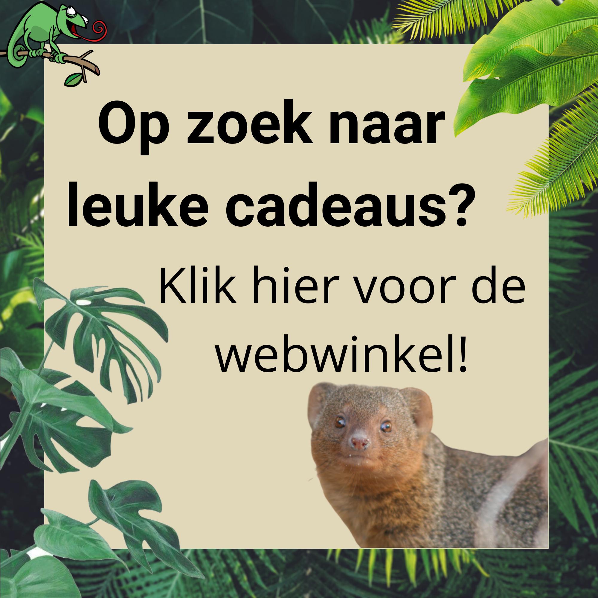 Webwinkel knop homepage