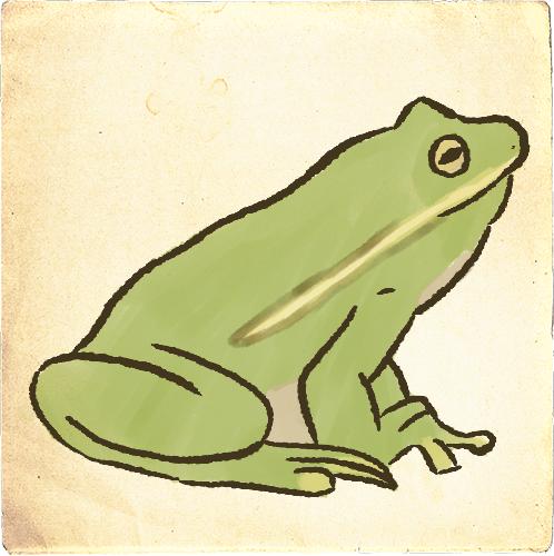 Amfibieën afbeelding
